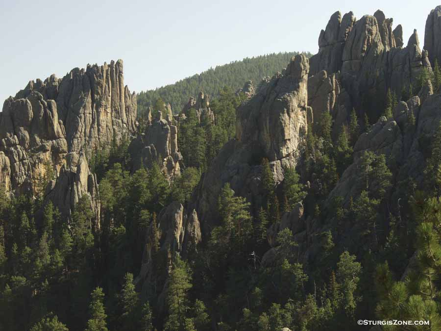 in the Black Hills. It...